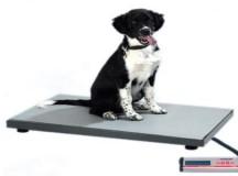 Обучението на кучета водачи за слепи с нова подкрепа