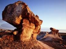 Вкаменената гора в Аризона