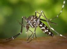 Борба с комарите с естествени средства от природата