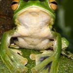 vanishing_frogs